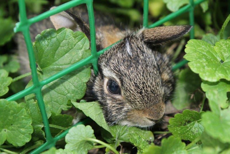 Dziecko królik łapiący w ogródzie obraz royalty free