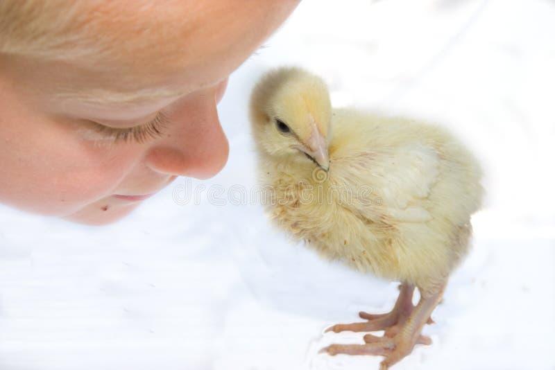 dziecko kurczaka zdjęcia stock