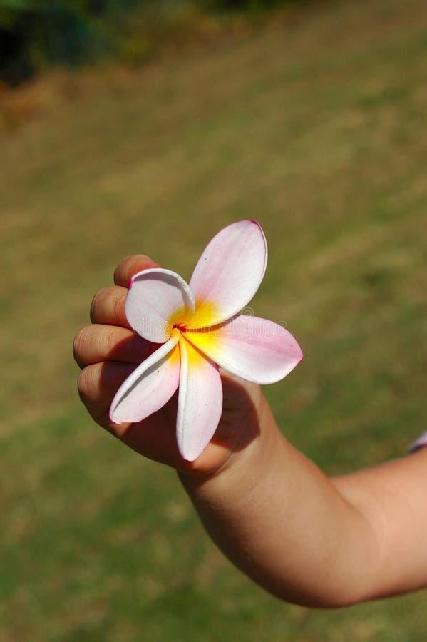 dziecko kwiat ręka fotografia stock