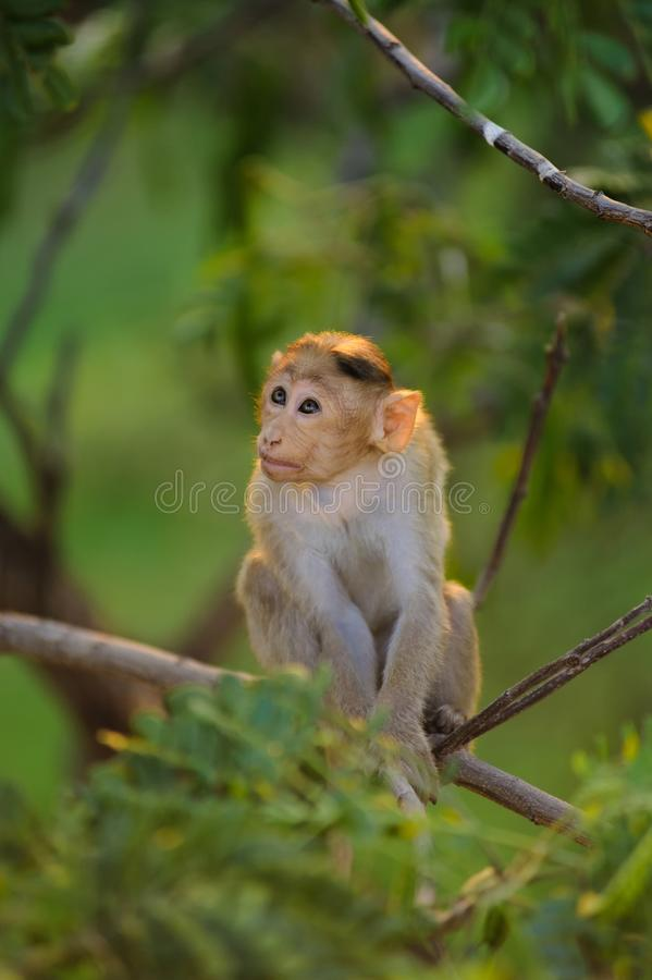 Dziecko małpa siedzi na zielonym drzewie obrazy royalty free