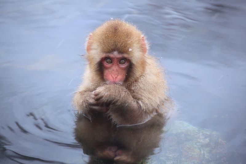 Dziecko małpa w gorącej wiośnie zdjęcie stock