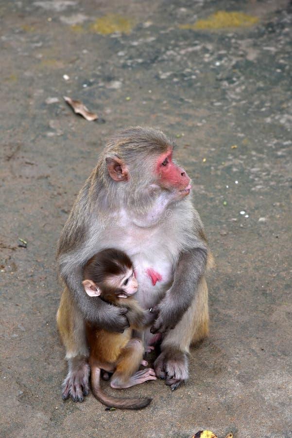 Dziecko małpa z matką fotografia stock