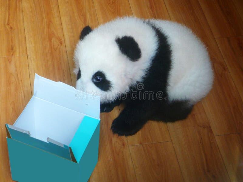 Dziecko panda obrazy royalty free