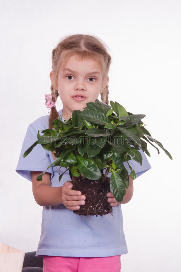 Dziecko przeflancowywa houseplant obraz stock