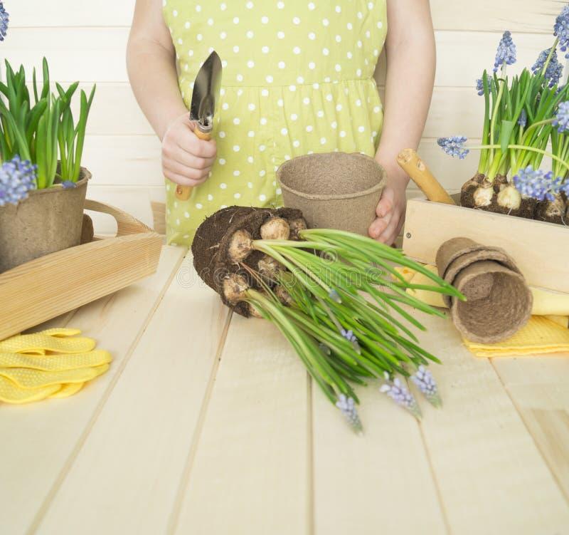 Dziecko przeflancowywa kwiatu Wiosna Proces rośliny przeszczepienie zdjęcie royalty free
