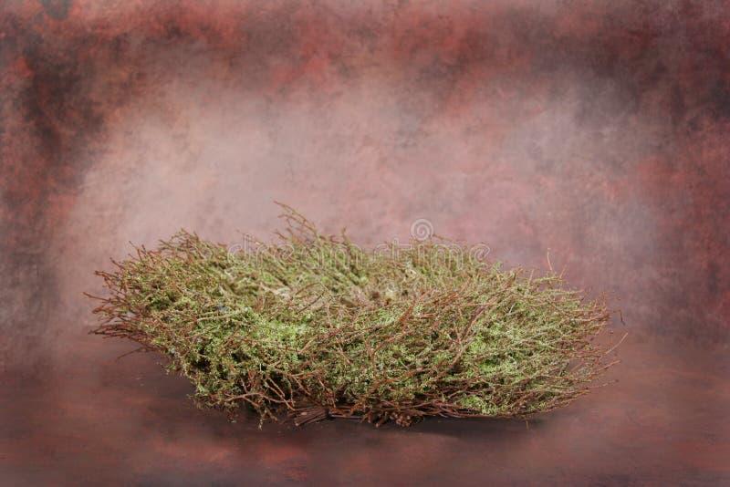 dziecko ptaka fantazji kwiecista klienta insert wyizolował gniazda wyznaczonym studio zdjęcie stock