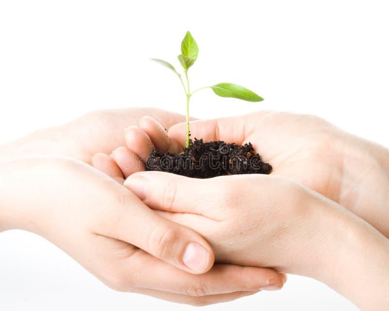 dziecko rąk jest żeński przeszczepów drzewo zdjęcia royalty free