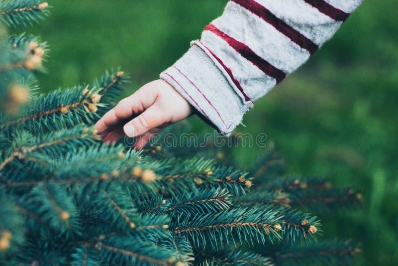 Dziecko ręka dotyka jedlinowego drzewa obraz stock
