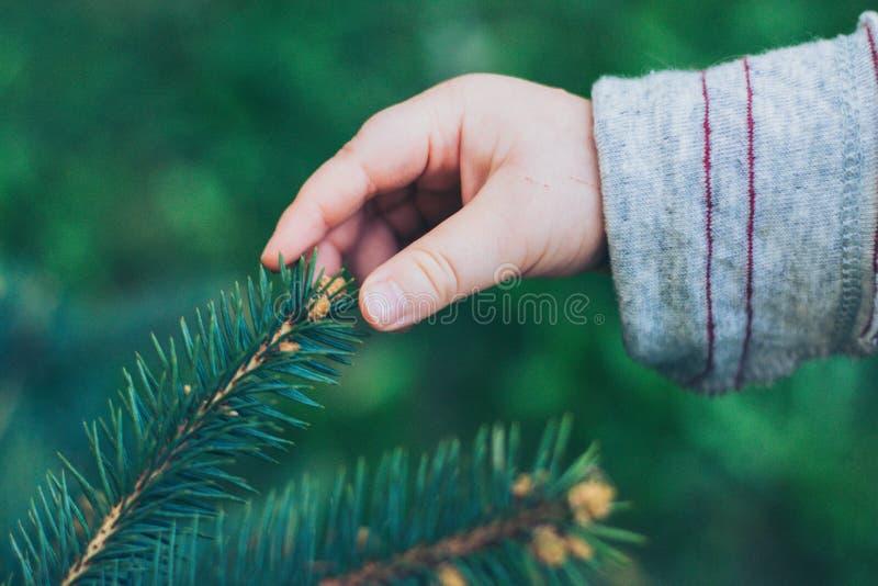 Dziecko ręka dotyka jedlinowego drzewa zdjęcie stock