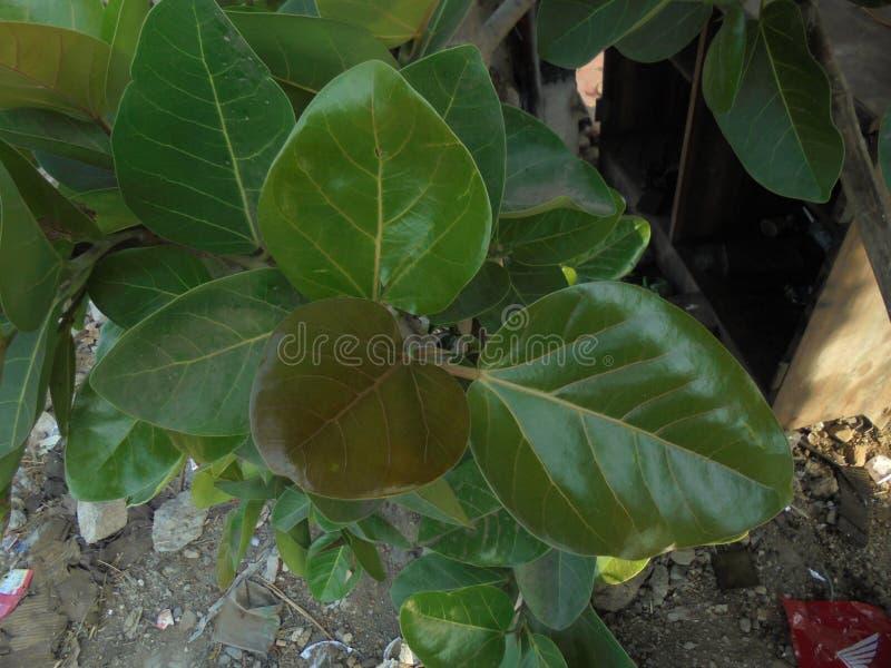 Dziecko roślina w otwartej fabule zdjęcie stock