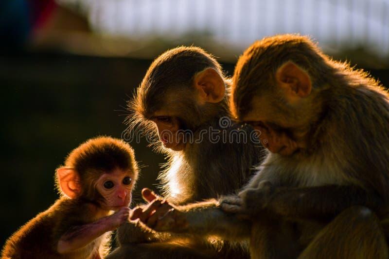dziecko rodzinny przygotowywa jej makaka małpy matki zdjęcia royalty free