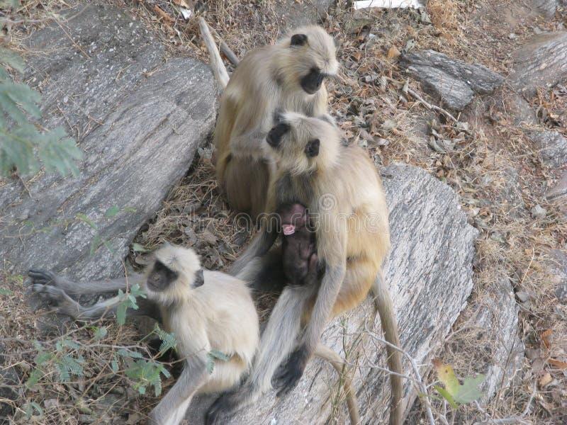 dziecko rodzinny przygotowywa jej makaka małpy matki obrazy stock