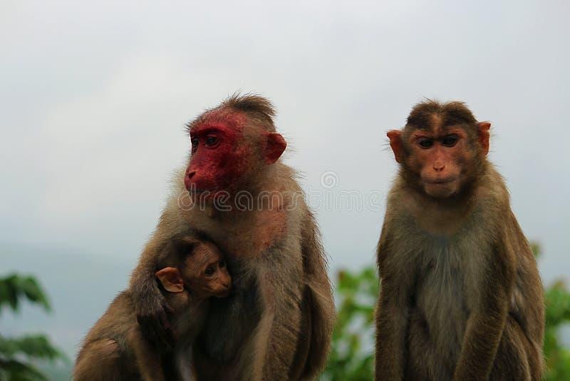 dziecko rodzinny przygotowywa jej makaka małpy matki obraz stock