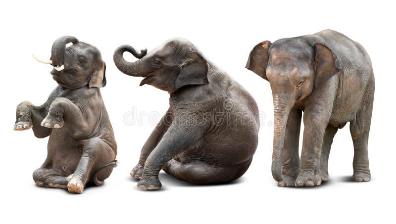 Dziecko słoń odizolowywający zdjęcia stock