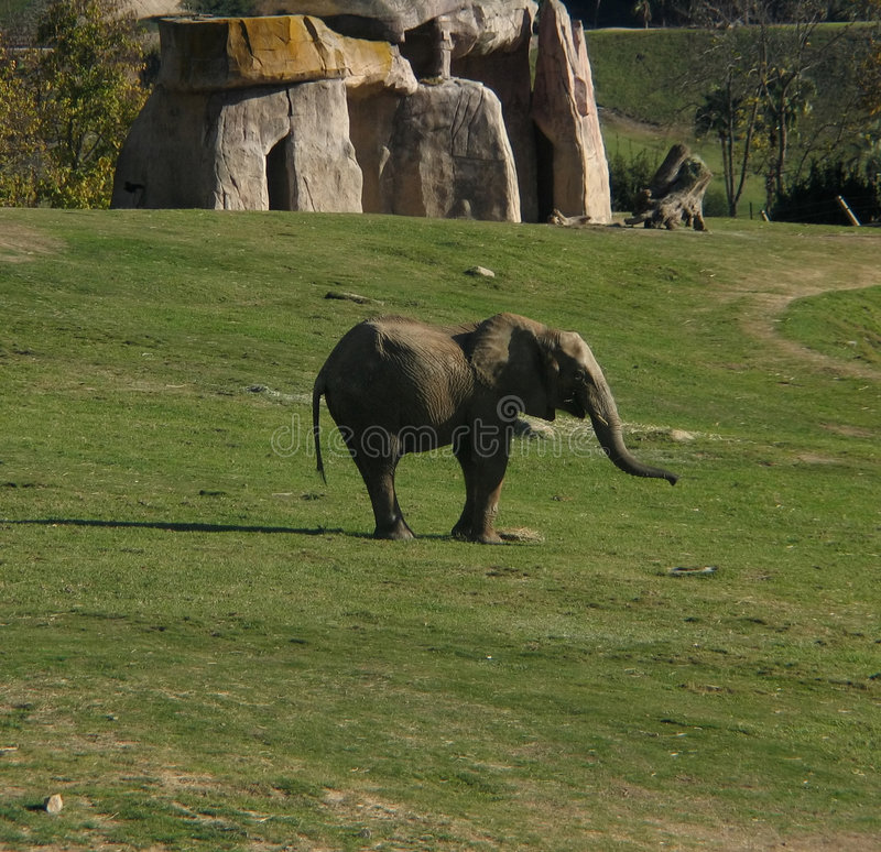 Download Dziecko słonia obraz stock. Obraz złożonej z mały, dzieciństwo - 142671