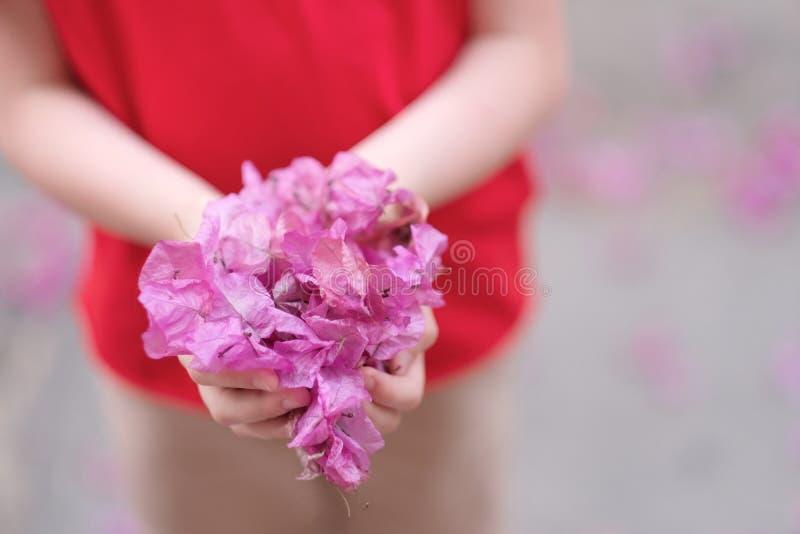 Dziecko trzyma mnóstwo różowych kwiatów płatki zdjęcie stock
