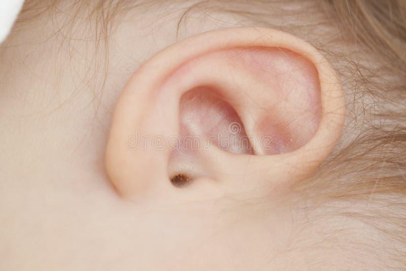 dziecko ucho obrazy royalty free