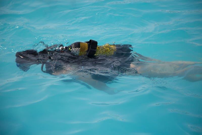 Dziecko uczy się nurkować w basenie, nurkowy degustator obraz royalty free