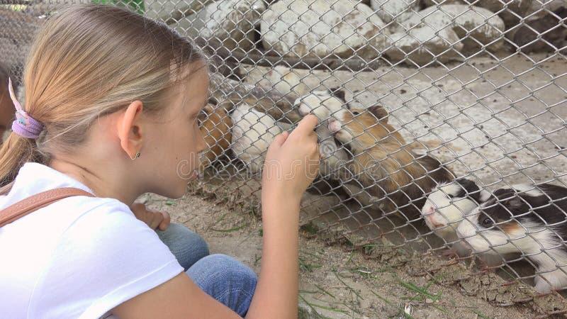Dziecko w zoo parku, dziewczyna Żywieniowi króliki doświadczalni, dzieciak miłości zwierząt zwierząt domowych Karmiąca opieka obrazy stock