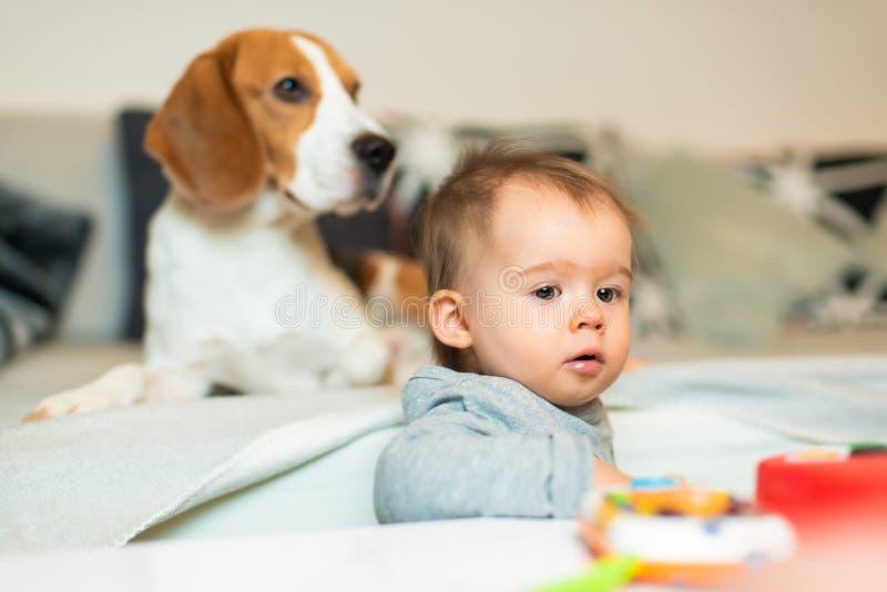 Dziecko z Beagle psem w domu Rodzinny życzliwy pies w domu fotografia stock