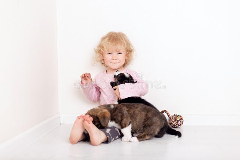 Dziecko z małymi psami bawić się w domu dziewczyna z szczeniakami dziewczynki całowanie, przytulenie z szczeniakiem na białym tle zdjęcie royalty free