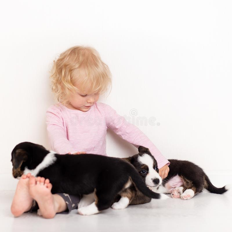 Dziecko z małymi psami bawić się w domu dziewczyna z szczeniakami dziewczynki całowanie, przytulenie z szczeniakiem na białym tle fotografia royalty free