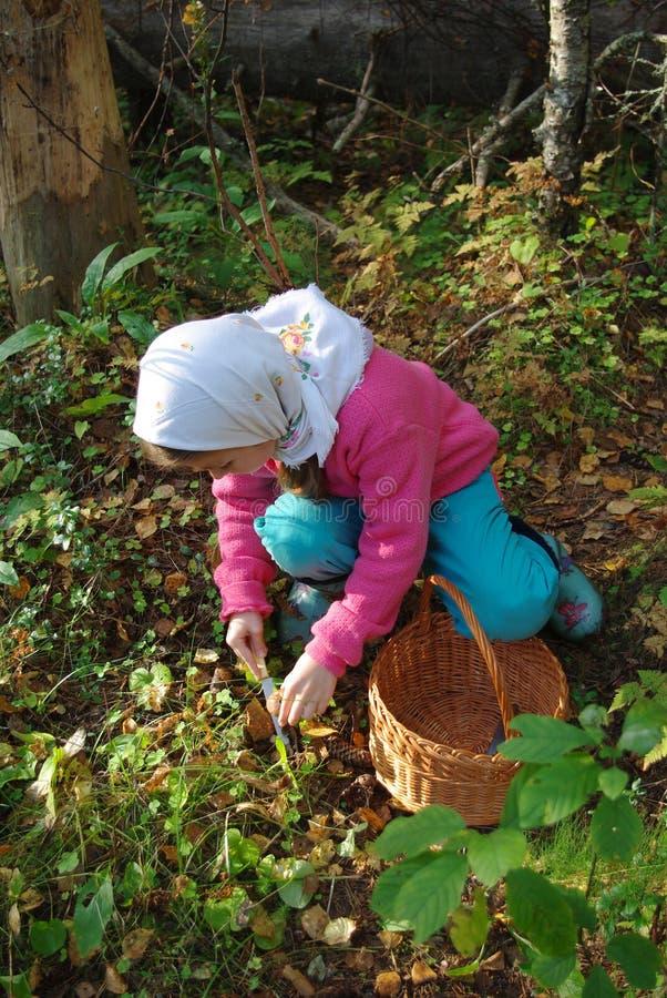 dziecko zbiera pieczarki fotografia royalty free