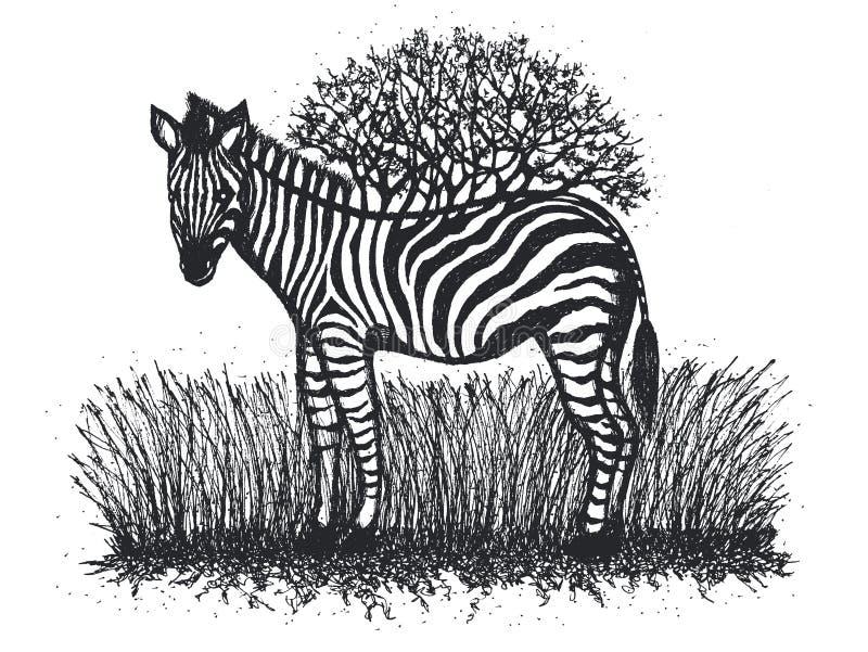 Dziecko zebry kwiatu projekta ręki drzewny ilustracyjny rysunek royalty ilustracja