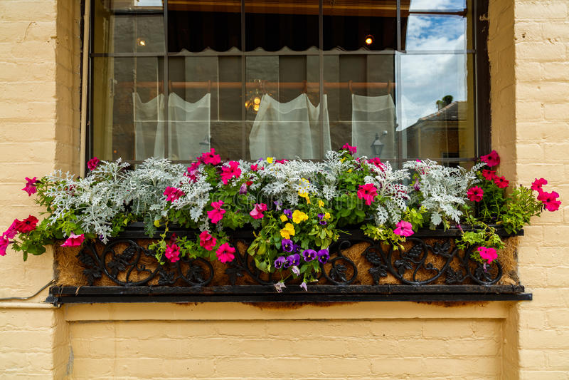 Dzielnica Francuska kwiaty zdjęcia stock