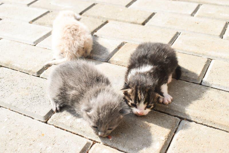 Dziesi?? dnia dziecka starych kot?w na bruku w podw?rzu zdjęcie royalty free