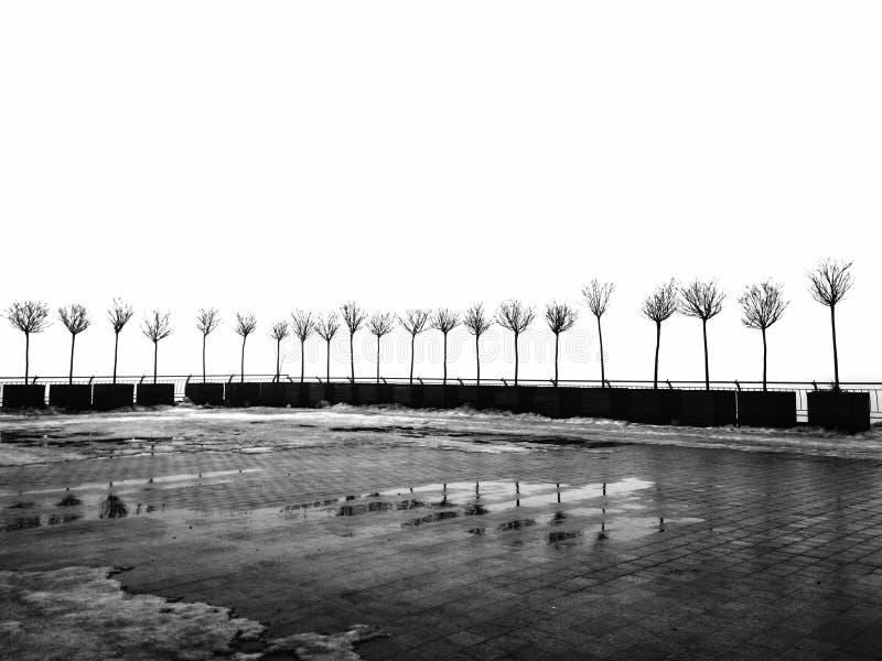 dziewczyn czarny kryj?wki obs?uguj? koszulowego fotografia biel s Rząd drzewa z spadać liśćmi Minimalizm w fotografii zdjęcia stock