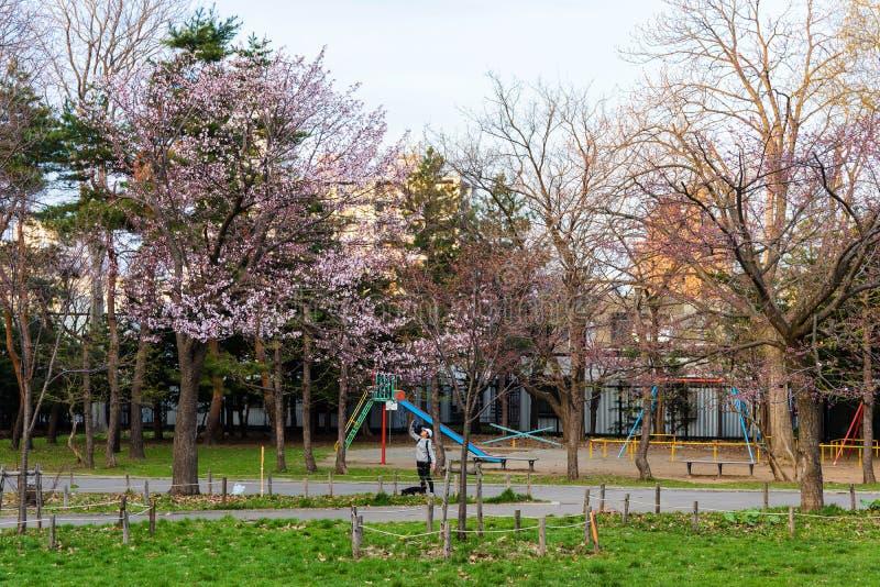 dziewczyna cieszy się czereśniowego okwitnięcie przy Maruyama parkiem zdjęcie royalty free