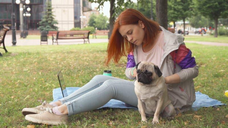 Dziewczyna czesze jej mopsa out w parku fotografia royalty free