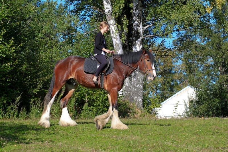 Dziewczyna i koń. zdjęcie royalty free