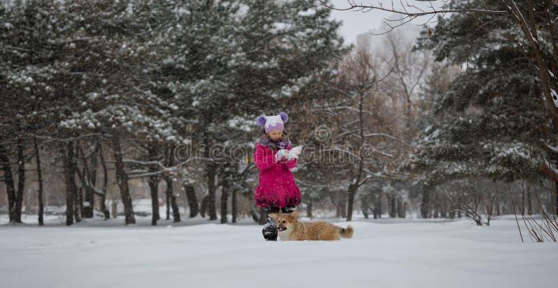 Dziewczyna i Pies zdjęcie royalty free