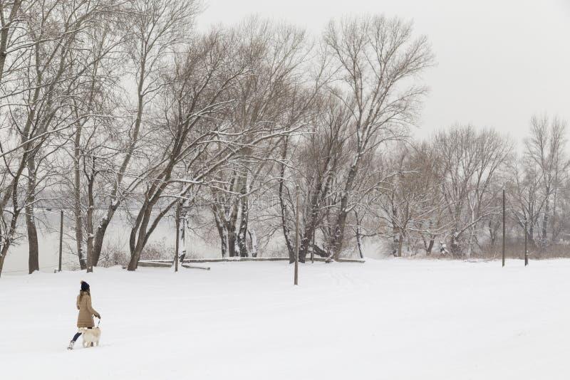 Dziewczyna i psi odprowadzenie w śniegu zdjęcia stock
