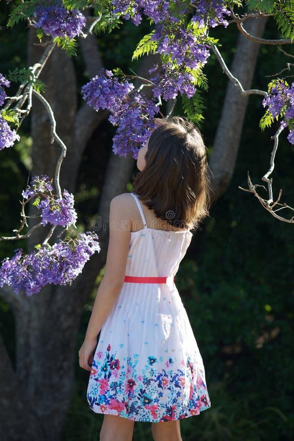 Dziewczyna jacaranda drzewem obraz royalty free
