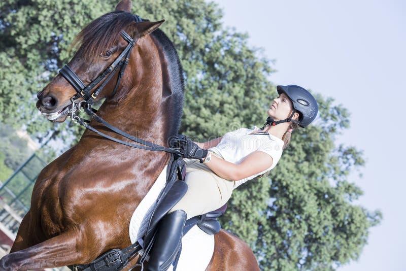 Dziewczyna jeździec i konia portret obrazy stock
