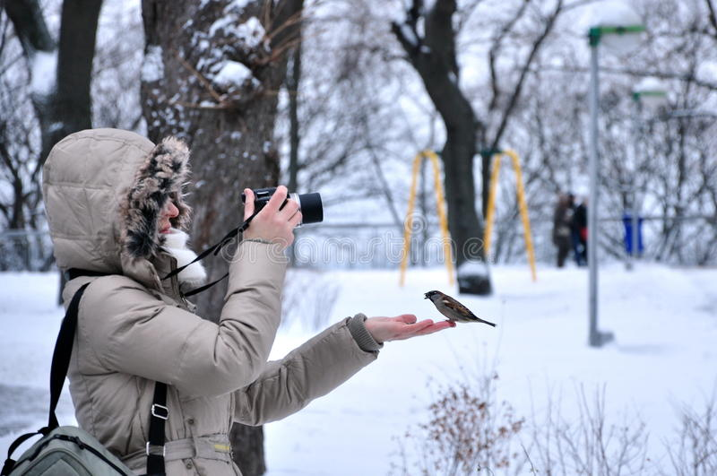 Dziewczyna, kobieta, fotograf karmi wróbla obraz stock