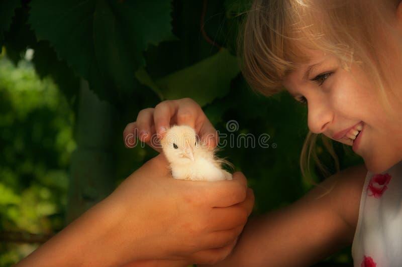 Dziewczyna, kurczątko, ręka, gospodarstwo rolne obraz royalty free