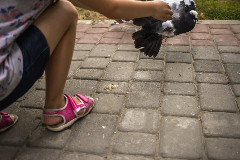 Dziewczyna prawie złapani gołębie w parku obrazy stock