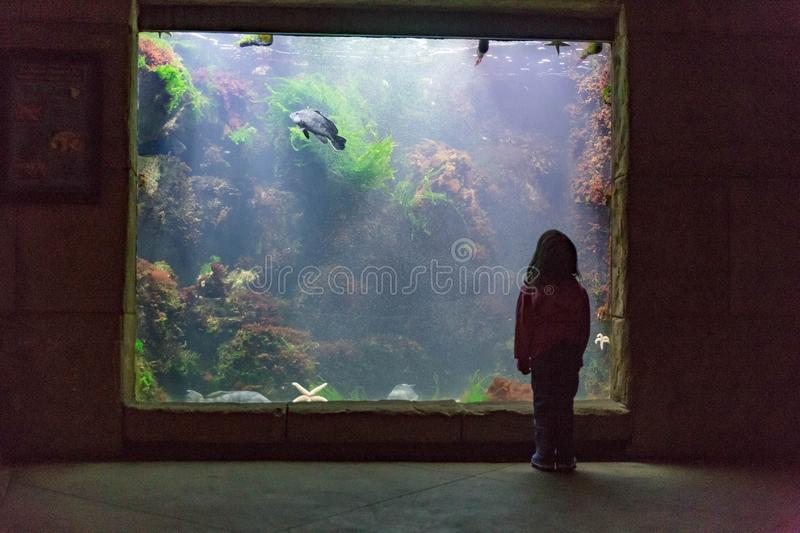 Dziewczyna przy akwarium obrazy royalty free
