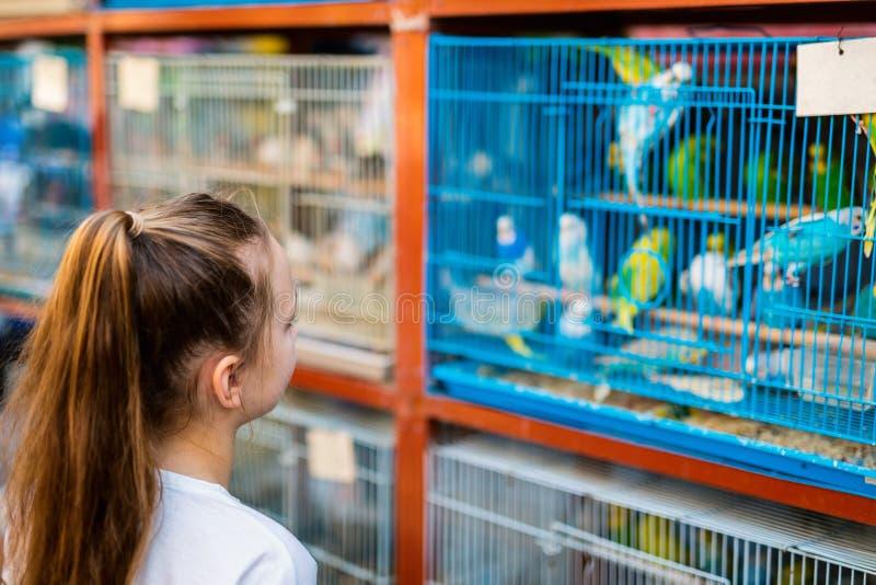 Dziewczyna przy ptaka rynkiem zdjęcie royalty free