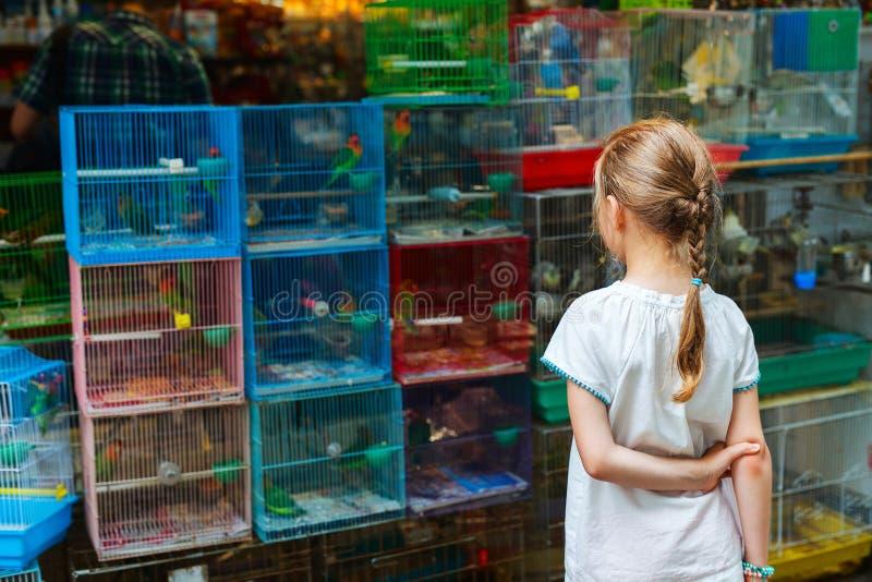 Dziewczyna przy ptaka rynkiem obrazy royalty free