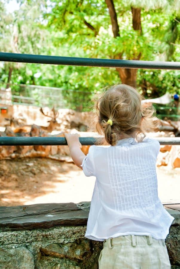 Dziewczyna target1014_0_ przy zwierzęta obrazy stock