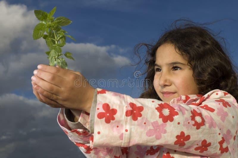 dziewczyna target250_1_ małej rośliny zdjęcia royalty free