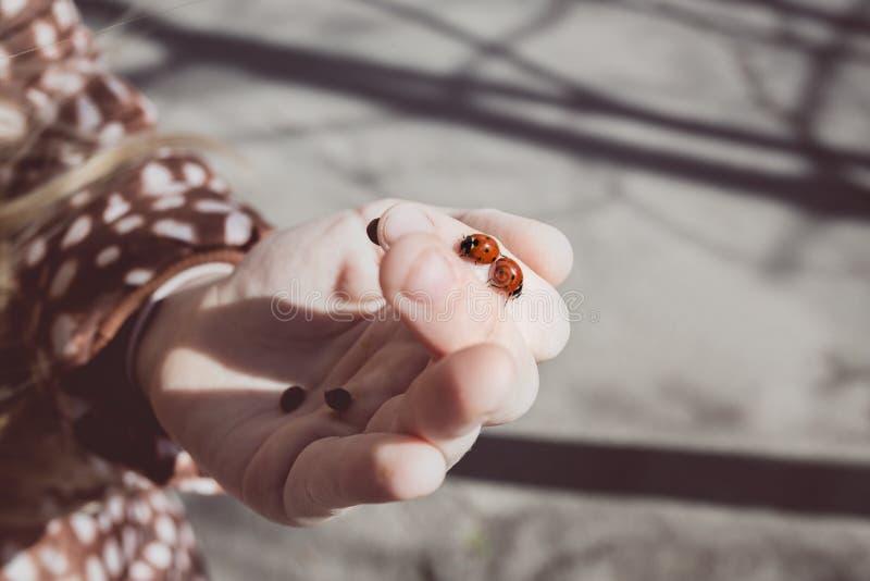 Dziewczyna trzyma ladybirds obraz stock
