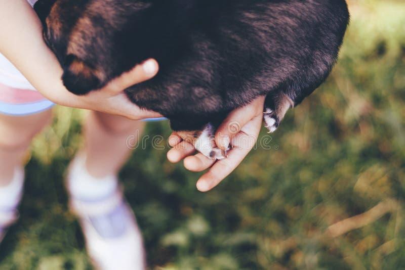 Dziewczyna trzyma psa w ona r?ki w jej rękach łapę uszkadzającą zdjęcia royalty free
