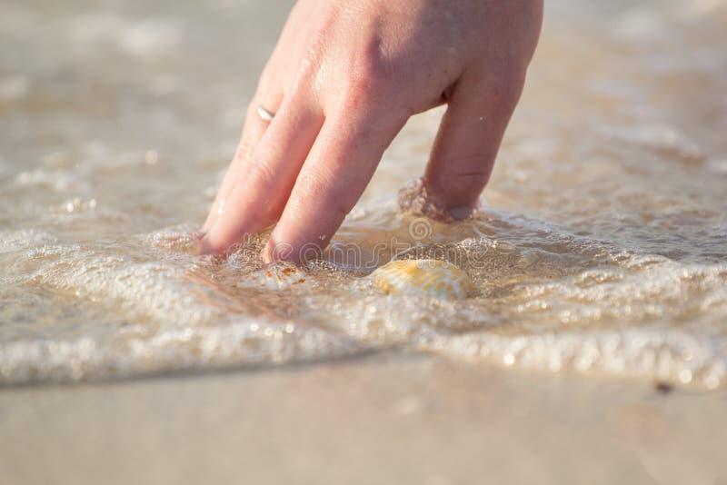 Dziewczyna trzyma seashell obrazy stock