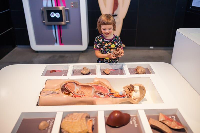 Dziewczyna w nauki muzeum fotografia stock